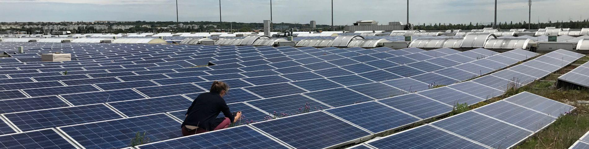 Photovoltaikanlage auf einem extensiv begrünten Dach