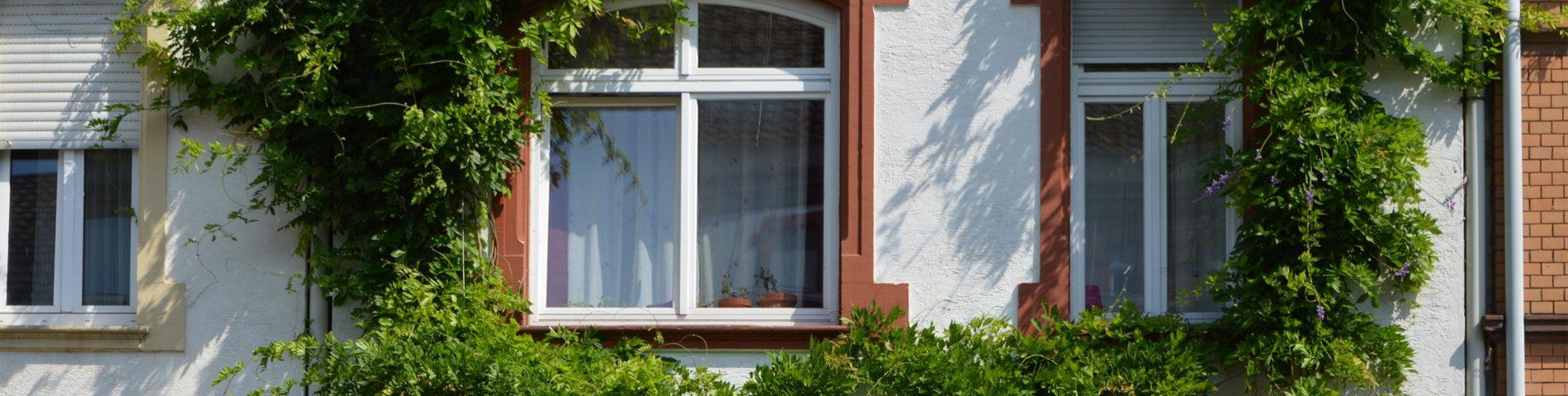 Fassadenbegrünung umrankt die Fenster eines Hauses