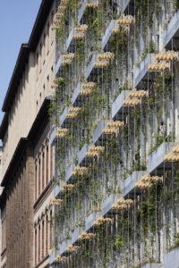 Fassadenbegrünung aus Rankgerüsten für Kletterpflanzen