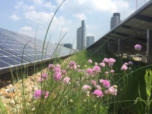 Dachbegrünung mit Photovoltaikanlage, Blumen im Vordergrund, Hochhäuser im Hintergrund