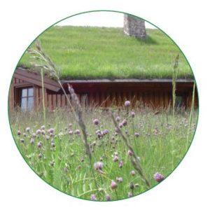 Blumenwiese unten, oben im Hintergrund ein Haus mit begrüntem Dach