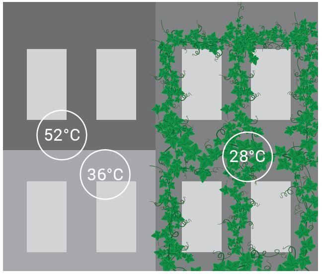 Grafik Erwärmung von Gebäudeoberflächen mit und ohne Begrünung. Ohne bis 52 Grad, mit bis 28 Grad