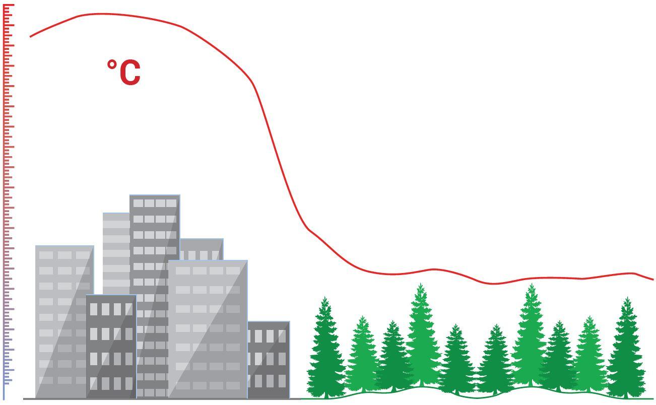 Grafik unbegrünte Stadt neben Wald mit höherer Temperaturkurve über der Stadt
