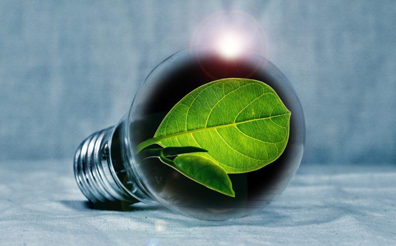 Blätter im Inneren einer Glühbirne
