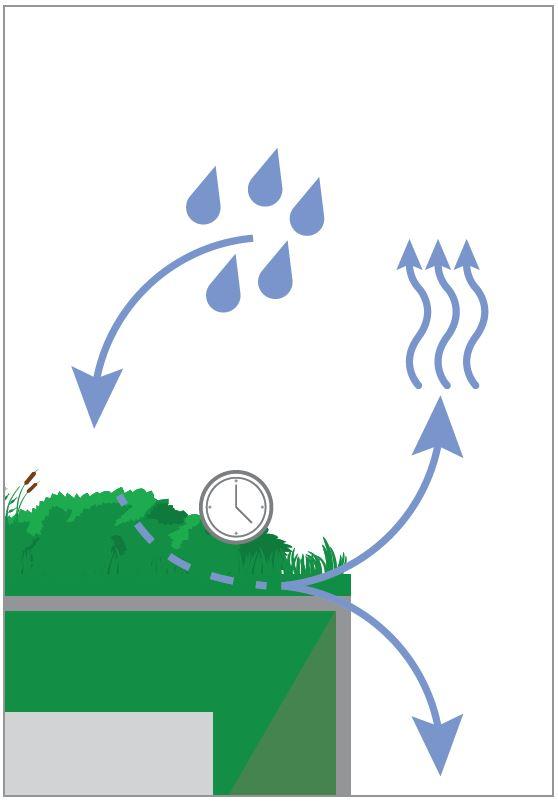 Grafik Regenwasser wird von der Dachbegrünung zurückgehalten und zeitverzögert verdunstet