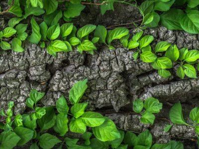 wood-1350175_1920_1