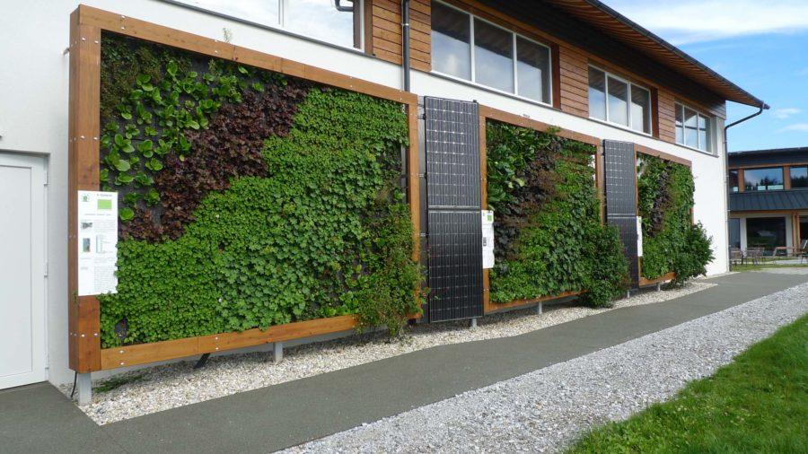 Fassadenbegrünung in Holzrahmen mit PV Modulen © Uli Pitha