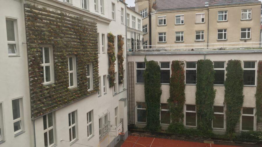 Außenwandbegrünung (c) TU Wien