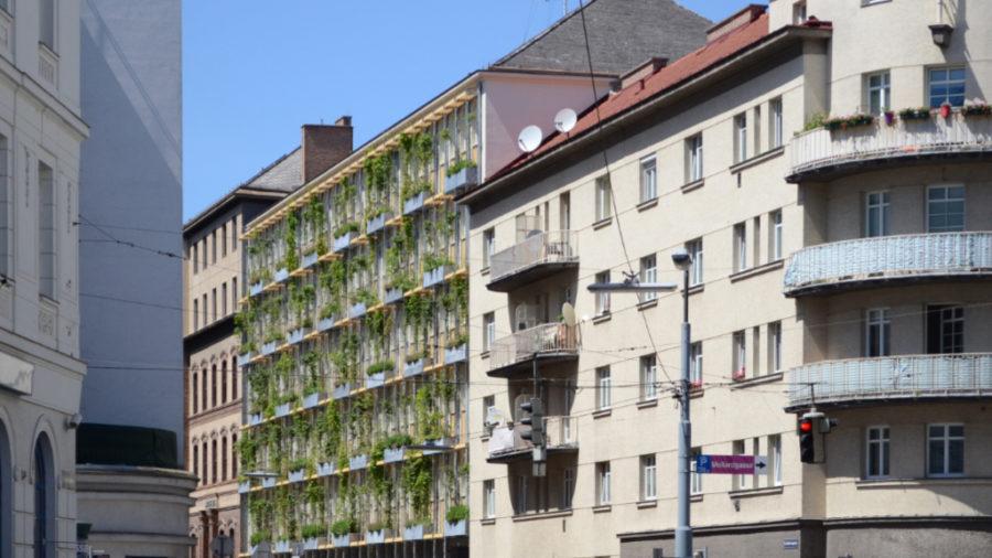 Fassadenbegrünung, MA 31, 1060 Wien