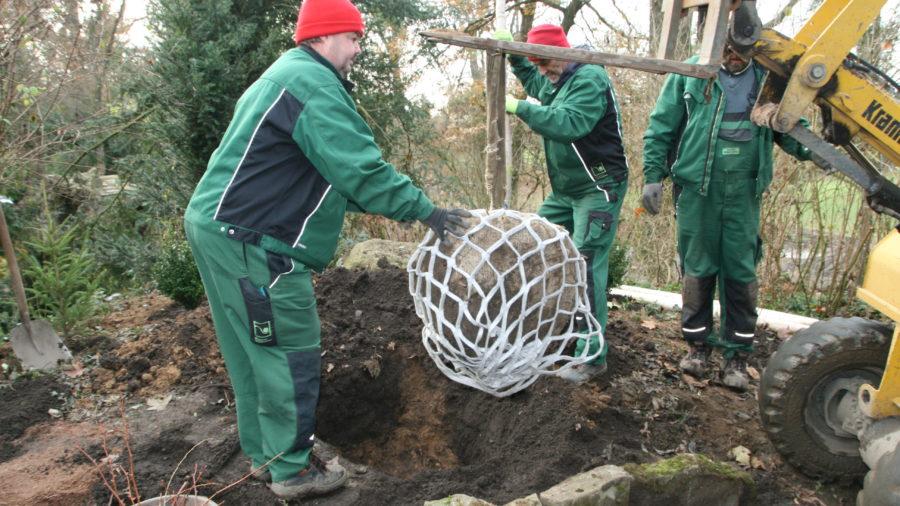 Lite-Net für Bäume