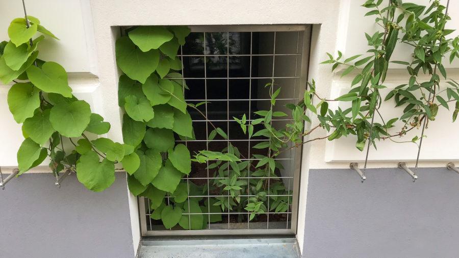 Pflanzen ranken sich auf die Seile