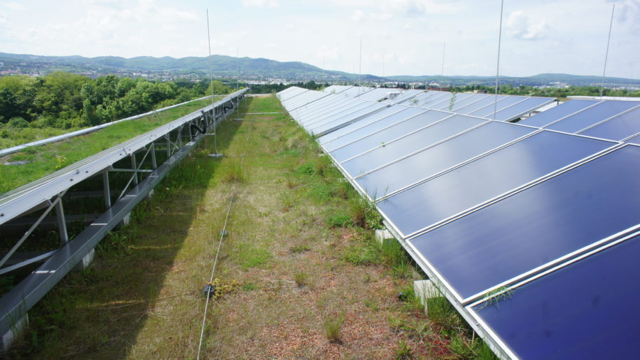 Solargründach