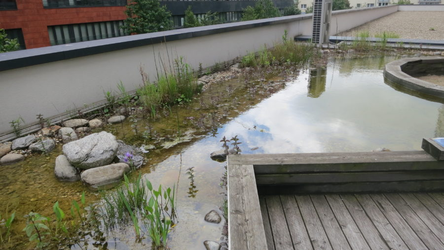 Der Teich