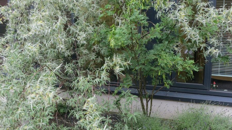 Beet am Dachgarten
