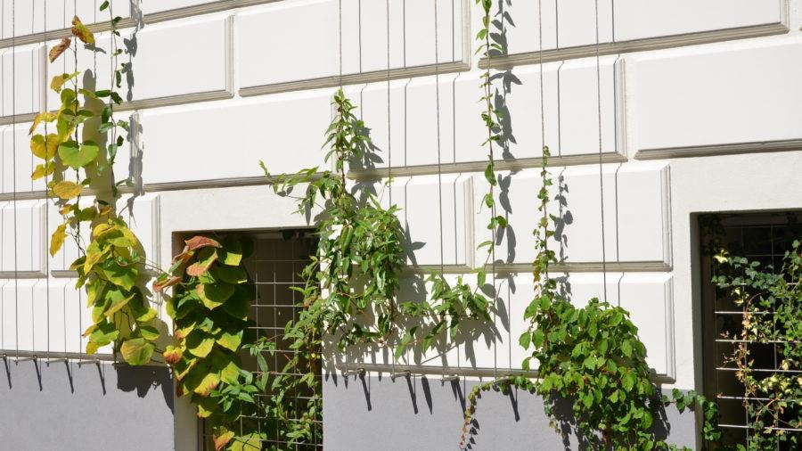 Projekt LA VERDE VITA, Römergasse 59, 1160 Wien