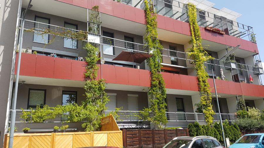 bodengebundene Fassadenbegrünung Wohnbau