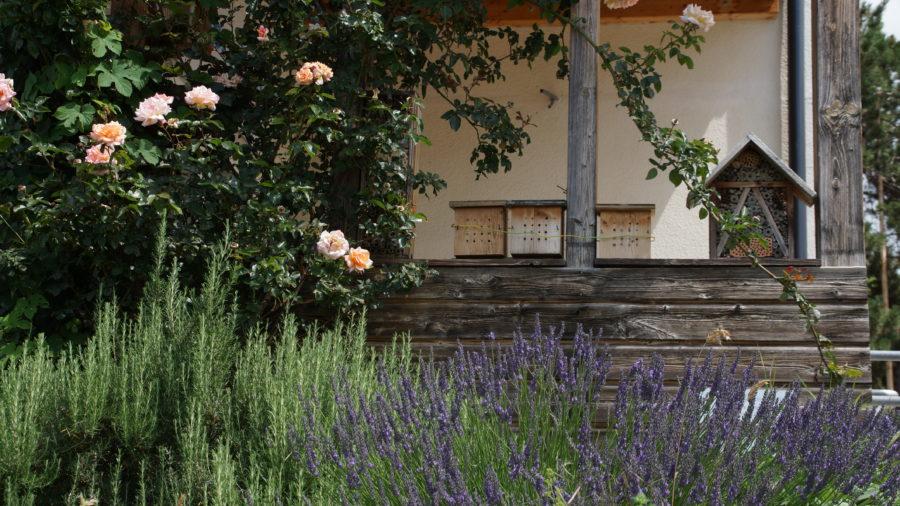 Rosmarin, Lavendel, Insektenhotels, Rose, Salbei in der BFA