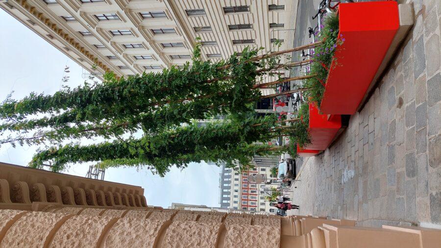 Fassadenbegrünung mit Gerüstkletterpflanzen (C) Schöberl